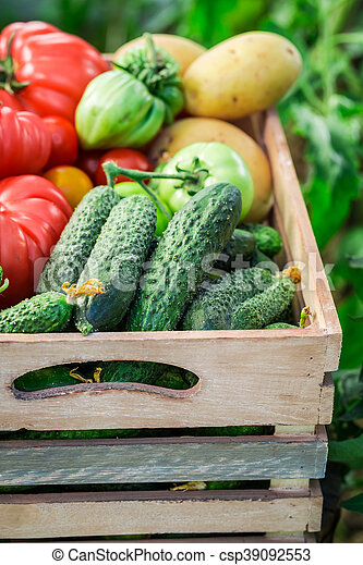 Healthy tomatoes and cucumbers in wooden box - csp39092553