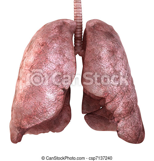 Healty lungs isolated on white. 3d render - csp7137240