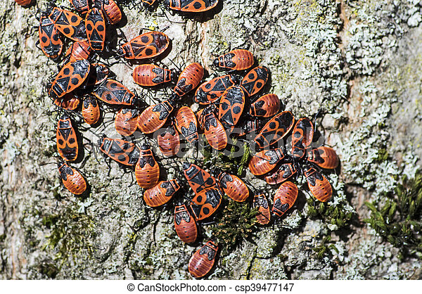 Heap of firebugs on a tree - csp39477147
