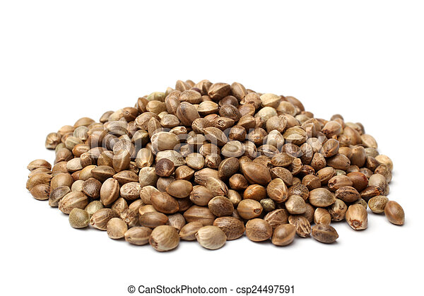 Heap of hemp seeds - csp24497591