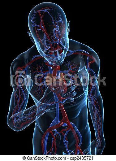 Human heart diagram in english
