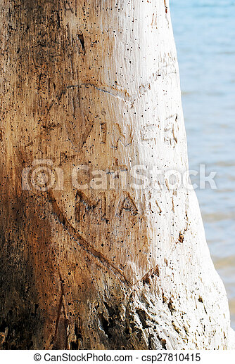 Heart Names Carved In Tree Heart Carved In Tree With Lovers Names