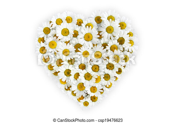 heart of daisies flower on white background - csp19476623