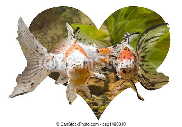 Heart of Goldfish - csp1495310