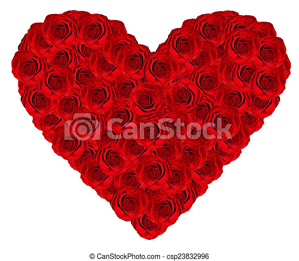 heart of roses on a white background - csp23832996