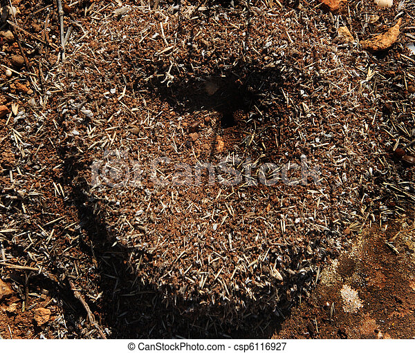 heart of the anthill in sunny day - csp6116927