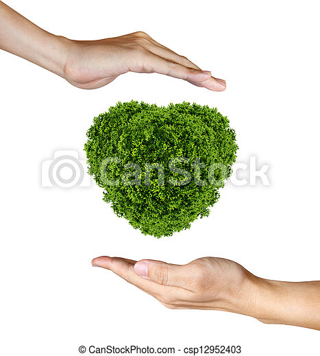 Heart Plant in the human hands on white background - csp12952403
