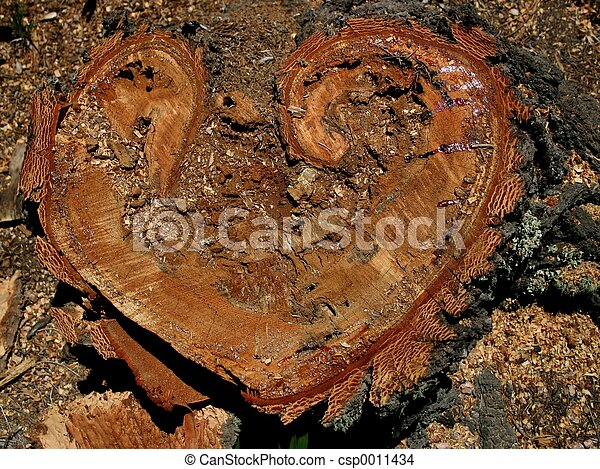 Heartwood - csp0011434