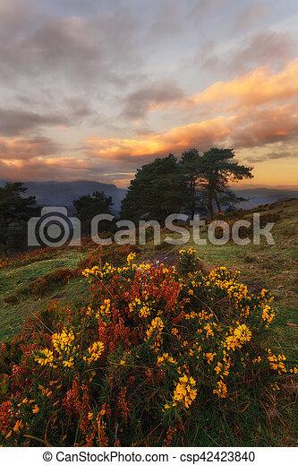 Heather flowers in the Saibigain mountain - csp42423840