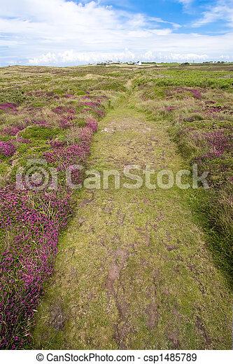 heather path - csp1485789