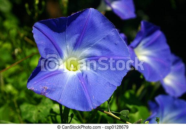 Heavenly Blue - csp0128679