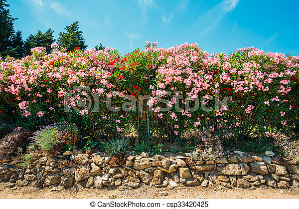 Hedge of flowering shrubs pink flowers garden design landscaping hedge of flowering shrubs pink flowers garden design csp33420425 mightylinksfo