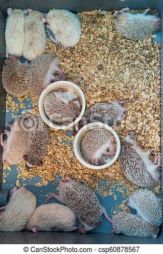 Hedgehog - csp60878567