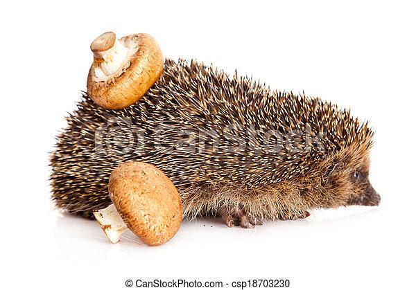 hedgehog - csp18703230