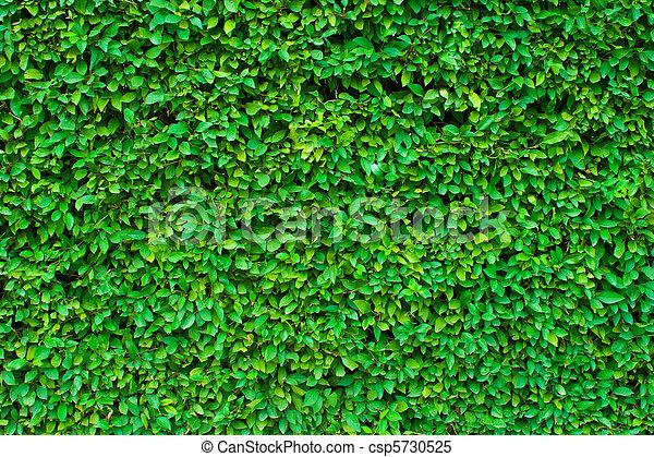 Antecedentes verdes de Hedgerow - csp5730525