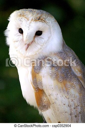 hedwig the barn owl cream barn owl that looks like hedwig character