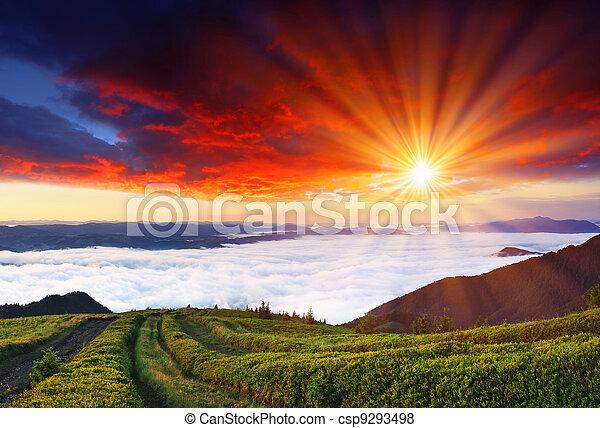 hegyek, reggel - csp9293498