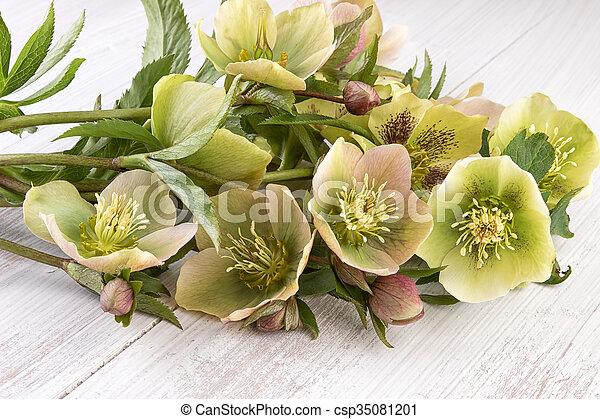 Hellebore Flowers Decoration Hellebore Flowers Or Christmas Rose