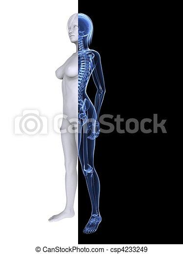 Un esqueleto femenino de rayos X - csp4233249