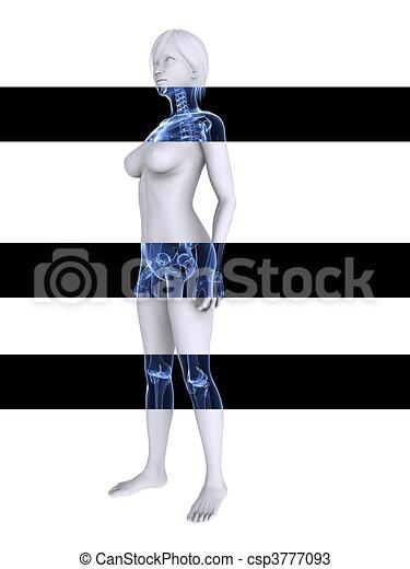 X-ray esqueleto femenino - csp3777093