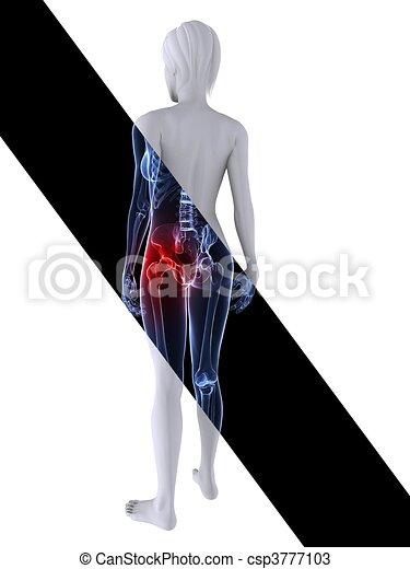 Un esqueleto femenino de rayos X - csp3777103