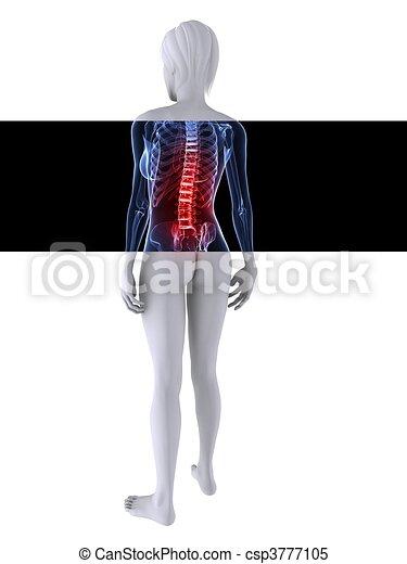 Un esqueleto femenino de rayos X - csp3777105
