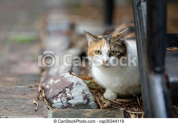 Hemingway Cat - csp35344119