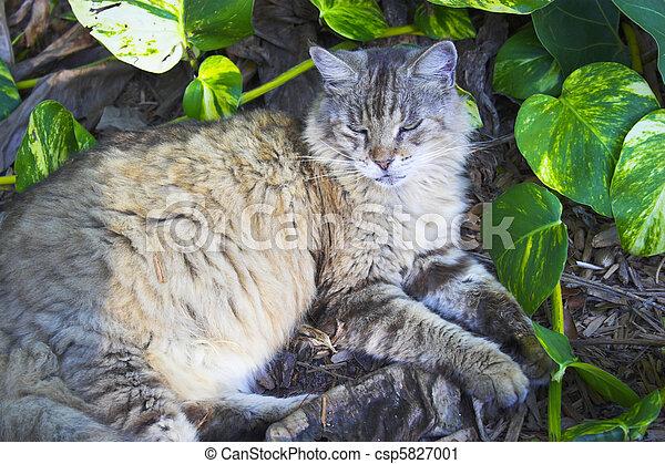 Hemingway cat - csp5827001