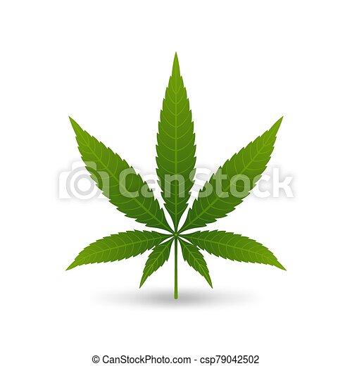 Hemp cannabis leaf on white background - csp79042502