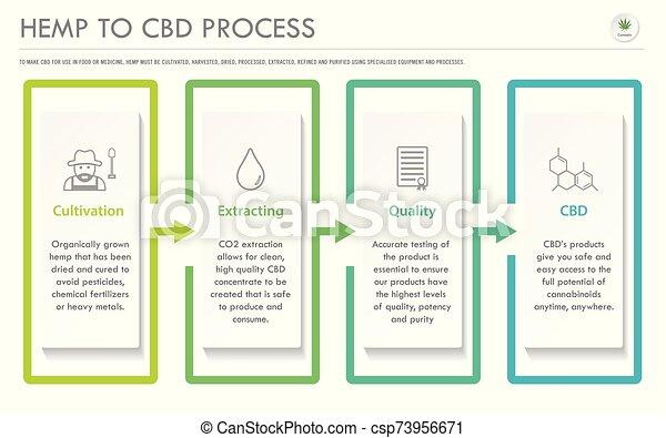 Hemp to CBD Process horizontal business infographic - csp73956671