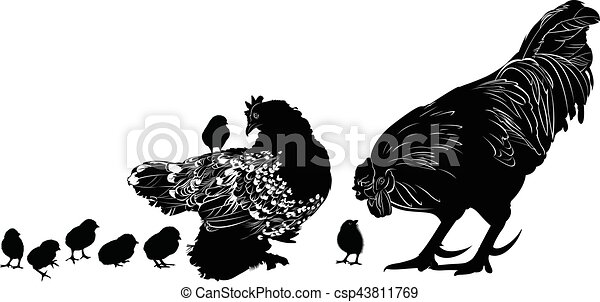 Line Art Rooster : Hen and chicks cock clip art vector search drawings graphics