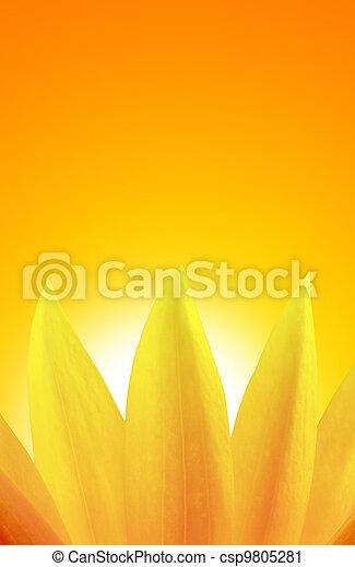 hen, solnedgang, solsikke - csp9805281