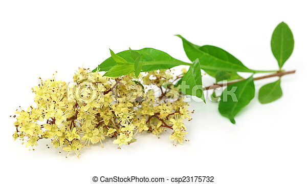 Henna Flower With Leeaves Over White Background