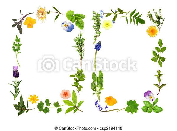 Herb and Flower Leaf Borders - csp2194148