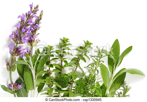 Herb Border Border Of Fresh Picked Herbs Includes Flowering Sage