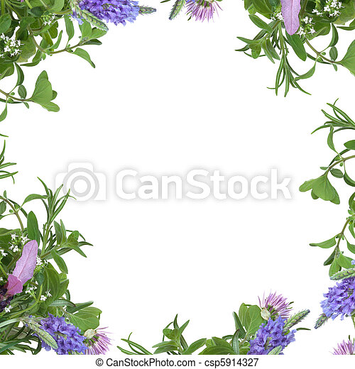 Herb Flower Border Lavender Thyme And Chive Flowers With Rosemary