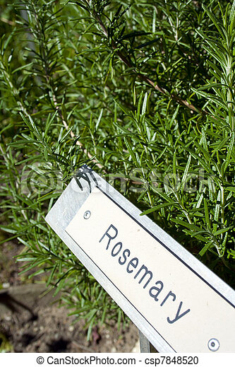 Delicieux Herb Garden Signs With Herbs   Csp7848520