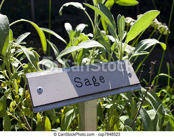 Herb Garden Signs With Herbs   Csp7848523