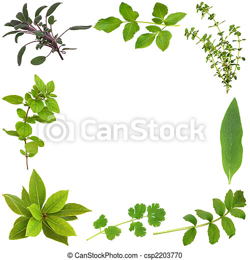 Herb Leaf Abstract Border - csp2203770