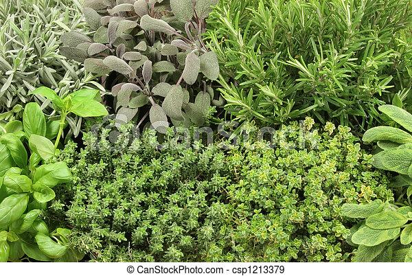 Herb Selection - csp1213379
