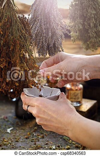 Medicinas de hierbas. El herbolario colecciona hierbas secas de San Juan para preparar una medicina de hierbas. - csp68340563