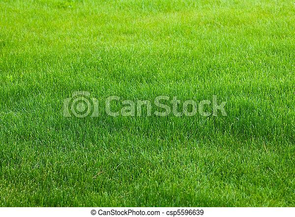 herbe, arrière-plan vert - csp5596639