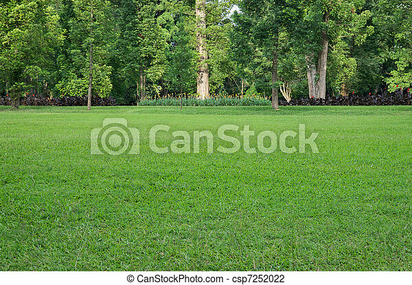 herbe champ, arbres - csp7252022