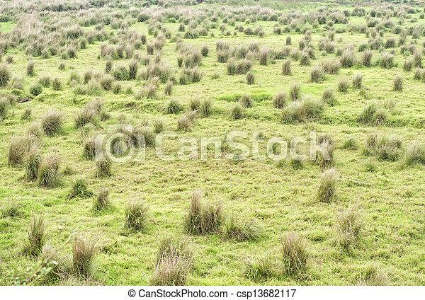 herbe, champ - csp13682117