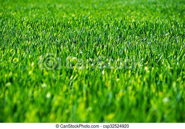 herbe champ - csp32524920