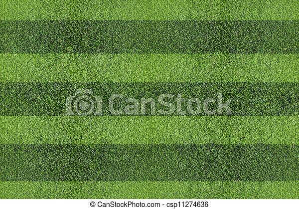 herbe champ - csp11274636