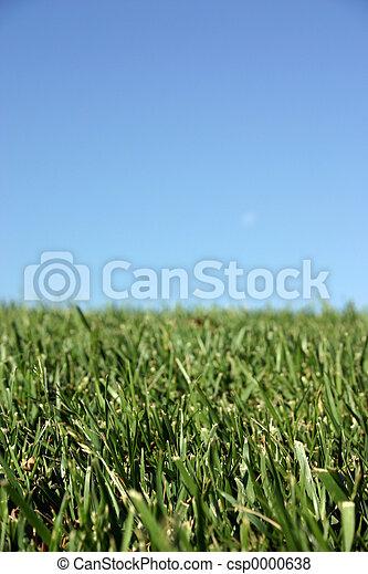 herbe, ciel - csp0000638