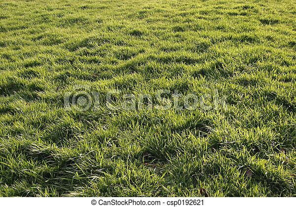 herbe, ensoleillé - csp0192621