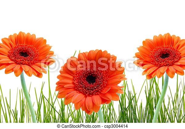 herbe, fleur, copyspace - csp3004414