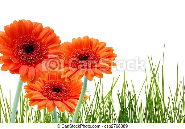 herbe, fleur, copyspace - csp2768389